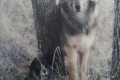 LOLA UND DER WOLF